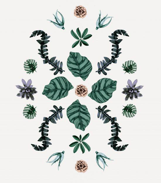 planter blader illustrasjon botanisk håndtegnet tegning blomst plante frukt
