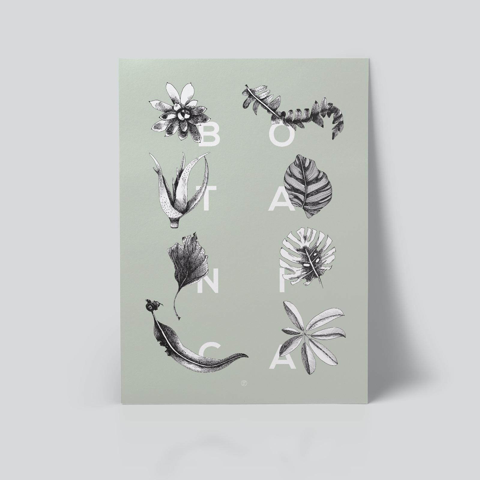 Botanica plakat Botanica letters mint botanisk ohoi studio